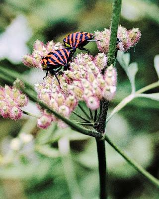 Insectos comiendo