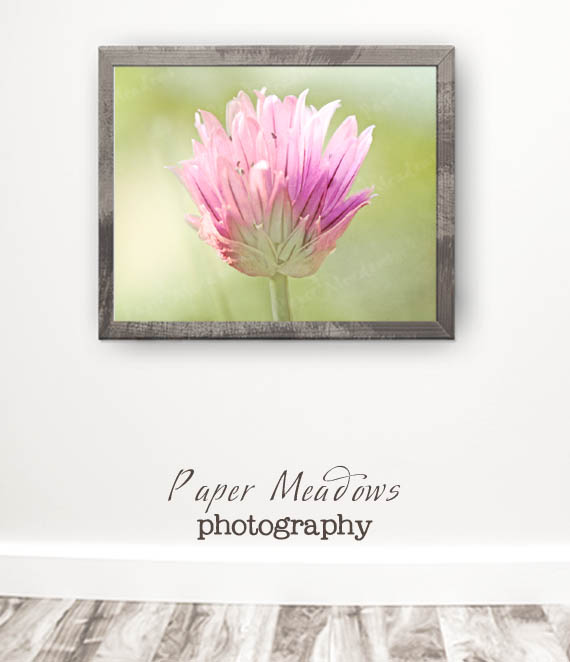 Flower Digital Print Photography Download. You can purchase and download our photography creations and instantly print at home from our Paper Meadows Photography Shop on ETSY. To Visit our shop now click here.