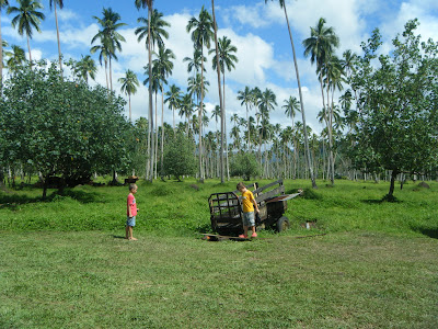 Fijian farm