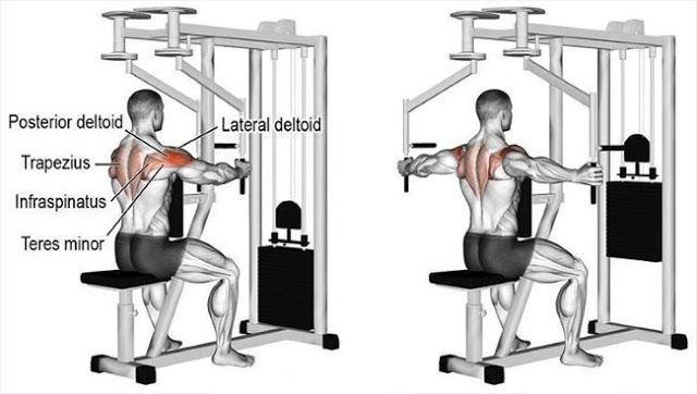 Reverse Machine Flies With Half Reps For Posterior