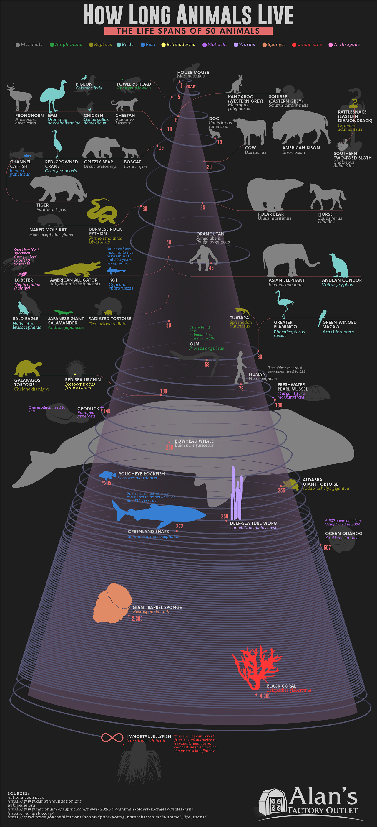 How Long Animals Live: The Life Spans of 50 Animals #infographic
