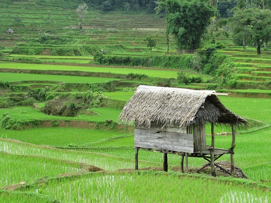 Sebuah bangunan sederhana alias gubuk di pematang sawah