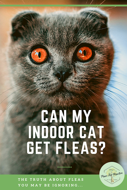In denial: The truth about fleas you may be ignoring