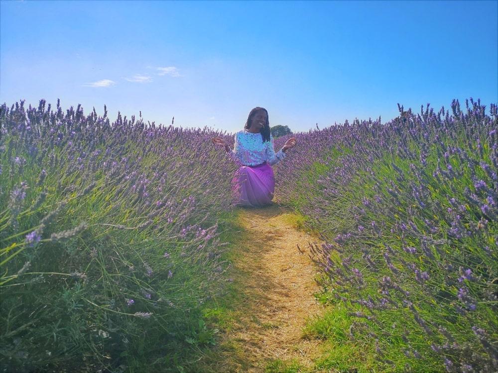lavender_fields_near_me