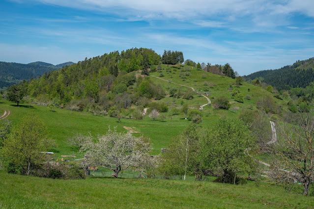 Premiumwanderweg Murgleiter | Etappe 2 von Gernsbach nach Forbach | Wandern nördlicher Schwarzwald 20