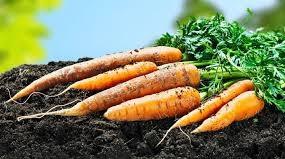 gerakan pertanian organik