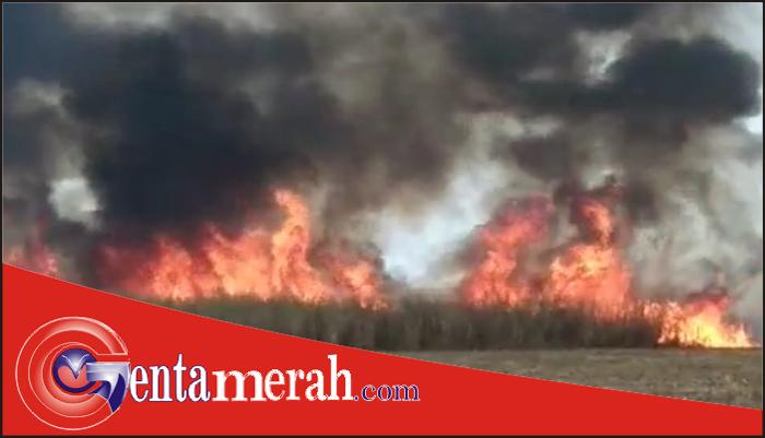 Agar Tidak Terjerat UUPPLH, Diduga PTGMP Lamteng Cari Kambing Hitam Pembakaran Lahan Tebu