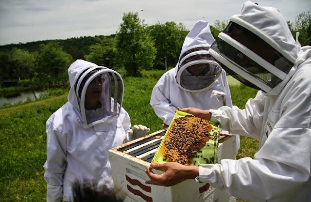 Τριήμερη ταχύρρυθμη εκπαίδευση μελισσοκόμων στην Δράμα