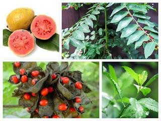 8 Tanaman Herbal Paling Berkhasiat