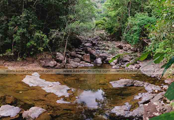 Kasaragod, Kerala, News, Waste removed by the White Guard team; Water flow restored in Ettam mail stream.