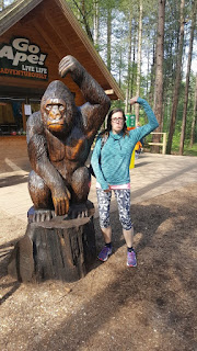 Go Ape near the New Forest