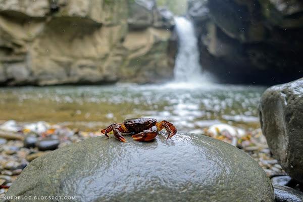 Речной краб на фоне водопада на реке Виляшчай