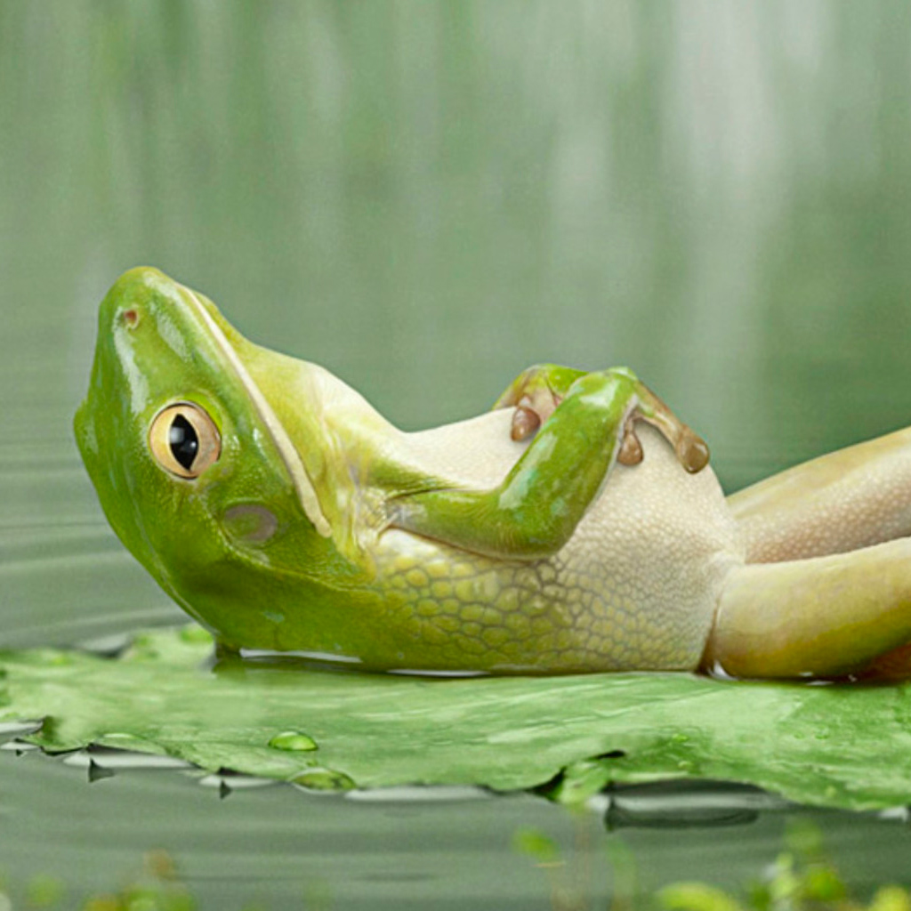 Latest Funny Pictures: Funny Frog Pictures