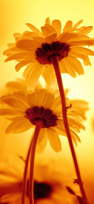 Beautiful yellow flowers wallpaper