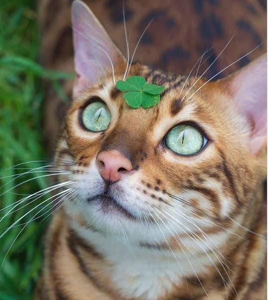 6 Foto Kucing Bermata Indah | Bagian 1