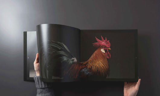 Dazzling Chickens Strut for the Camera in a New Photo Book by Moreno Monti and Matteo Tranchellin