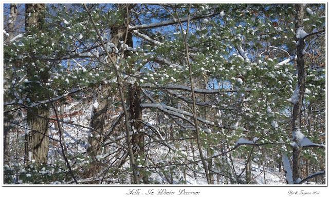 Fells: In Winter Decorum