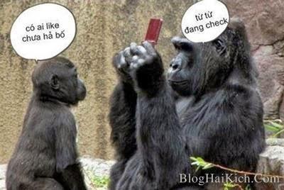 Ảnh động vật check facebook hài