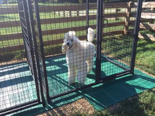Greatmats plastic perforated tile for dogs outdoor kennels