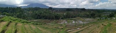 Jatiluwih Rice Terraces o Terrazas de Arroz de Jatiluwih. Isla de Bali, Indonesia.