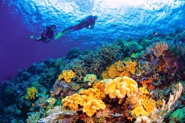 Menikmati Surga Laut Di Wakatobi Mahessa83