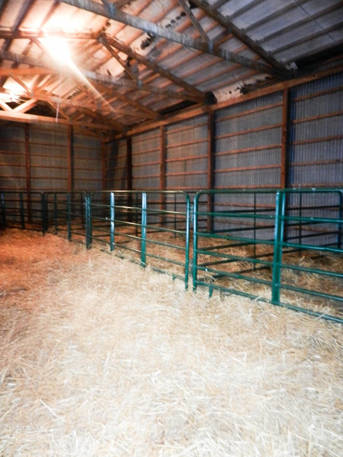 Dawson Cattle Company Show Cattle Knowledge