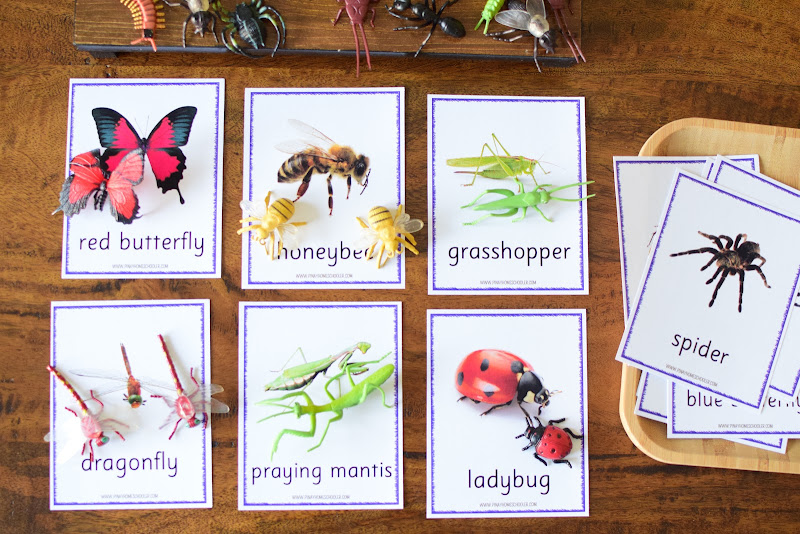IDENTIFYING INSECTS AND CREEPY CRAWLERS