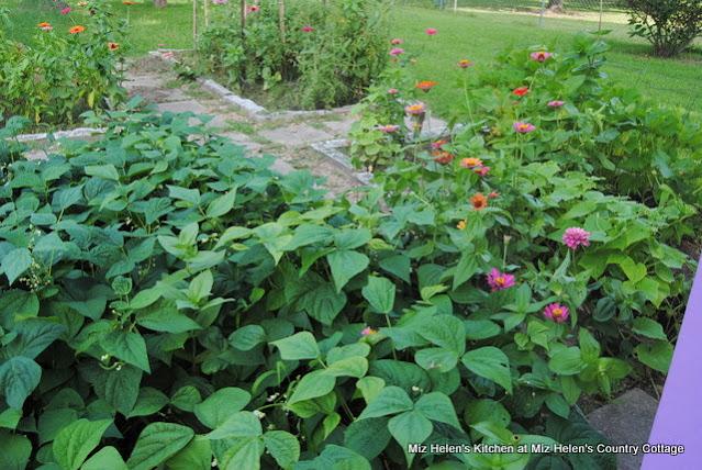 Mid-Summer's Garden at Miz Helen's Country Cottage