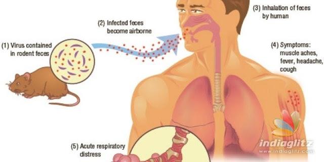 Belum Habis Virus Corona, Terbitlah Virus Hanta