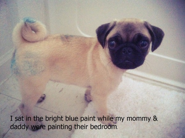 funny dogs Quotes