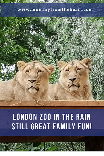 Family visit to London zoo pin