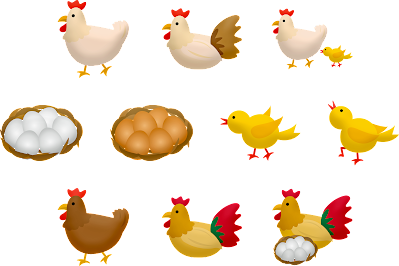 How to start poultry farming in Zambia