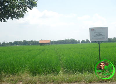 FOTO : Sawah Bupati Subang Ojang Sohandi di Binong disita KPK. Foto by Mang Yono