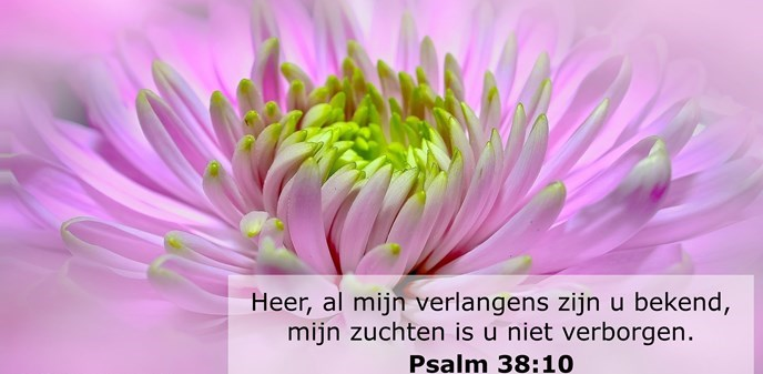 Heer, al mijn verlangens zijn u bekend, mijn zuchten is u niet verborgen.