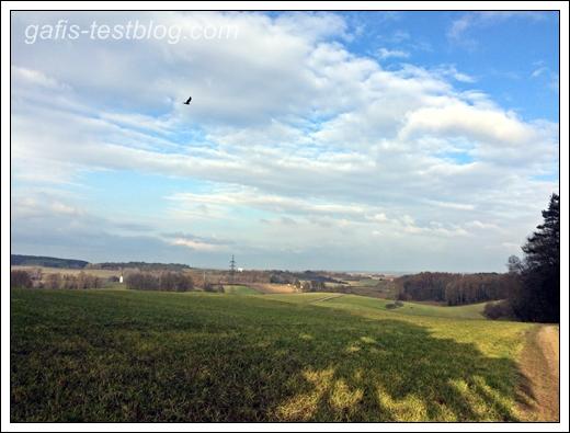 Landschaft im März mit Bussard