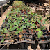 Recolectan semillas nativas de la región para reforestación