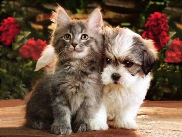 Funny & Cute Cats: Cute Cats and Dogs Together Pictures