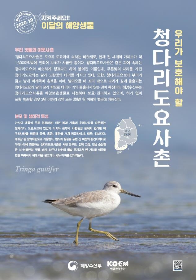 해수부, 2020년 10월 이달의 해양생물 '청다리도요사촌' 선정