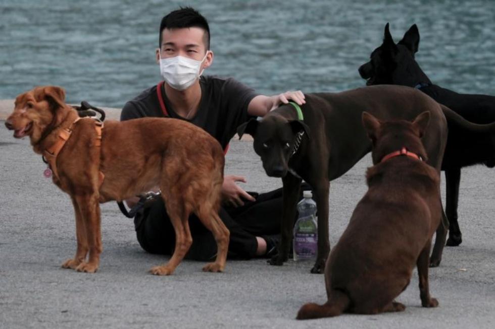 Dog Coronavirus