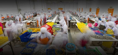 PT Dua Putra Utama Makmur Tbk bergerak dalam bidang perikanan terpadu membuka Lowongan Kerja Dibutuhkan Segera