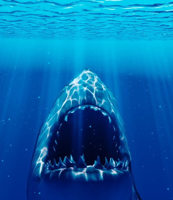 Scientists have discovered that sharks nearly went extinct 19 million years ago.