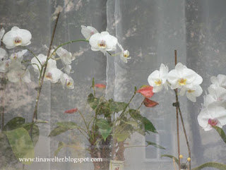 White Orchids, horizontal photo ©2015 Tina M. Welter  Windowsills of Dresden