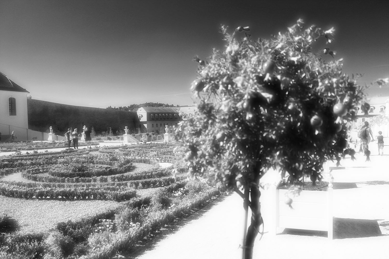 Bratislava Castle English Gardens and Pomegranate Tree