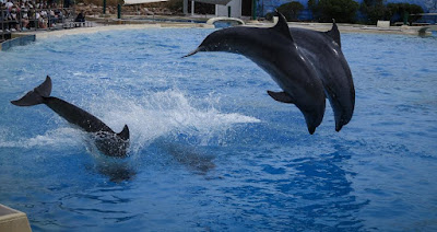 Ανακαλείται η άδεια της «Αττικό Ζωολογικό Πάρκο»