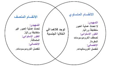 الانقسام المتساوي والمنصف