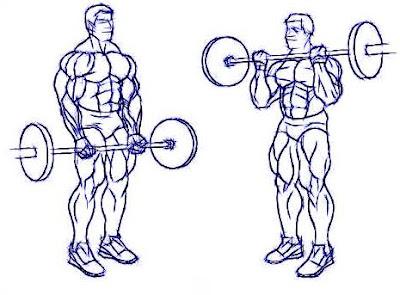 Rutina de entrenamiento corta duración masa muscular curl biceps