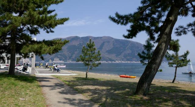 海津大崎の桜、サニービーチ