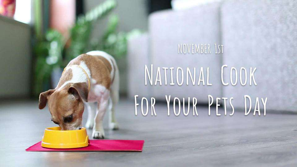 National Cook For Your Pets Day Wishes Images