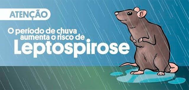 Leptospirose: prevenção sintomas e tratamento