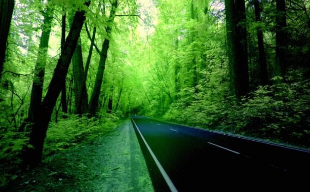 Background Pemandangan Hutan